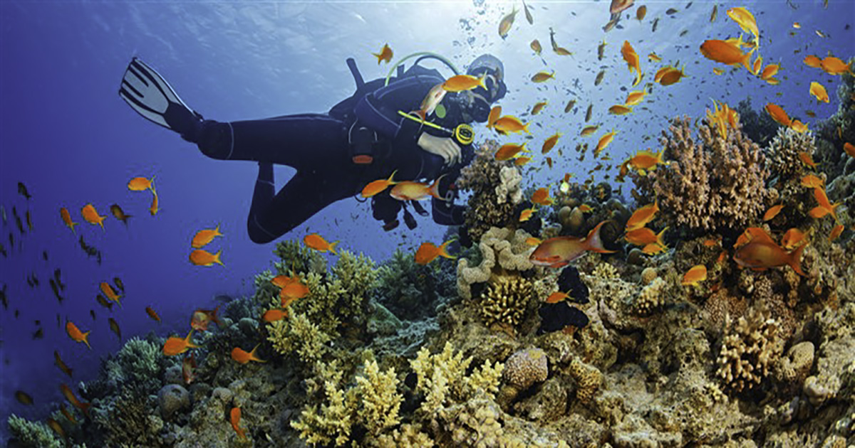 PADI AWARE - Coral Reef Conservation